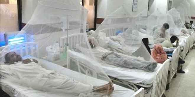 dengue7